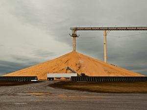 Actual mountain of corn