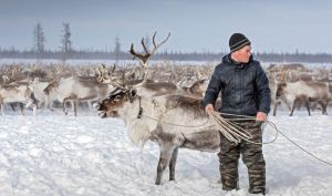 "Reindeer herder, from ""Quarter of a Million Reindeers to be Butched... after Anthrax Outbreak"" : ""Serbian officials have demanded a huge cull of a 250,000 reindeers by Christmas over the risk of an anthrax outbreak. Currently 730,000 animals are being kept in the Yamal Peninsula and the rest of the Yamalo-Nenets region."""