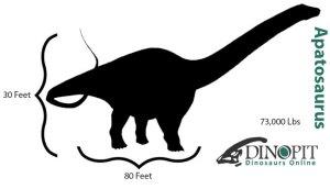 apatosaurus-size